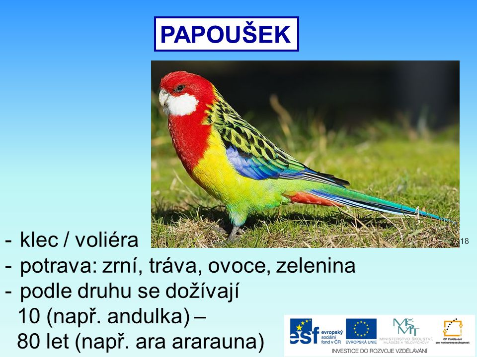 PAPOUŠEK -klec / voliéra -potrava: zrní, tráva, ovoce, zelenina -podle druhu se dožívají 10 (např. andulka) – 80 let (např. ara ararauna) 18