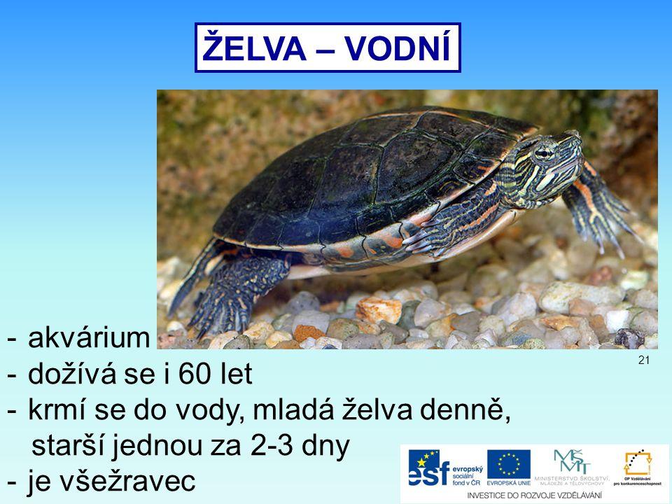 ŽELVA – VODNÍ -akvárium -dožívá se i 60 let -krmí se do vody, mladá želva denně, starší jednou za 2-3 dny -je všežravec 21