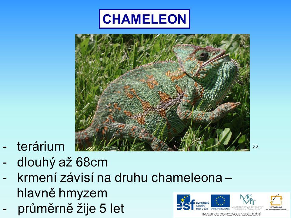 CHAMELEON -terárium -dlouhý až 68cm -krmení závisí na druhu chameleona – hlavně hmyzem - průměrně žije 5 let 22