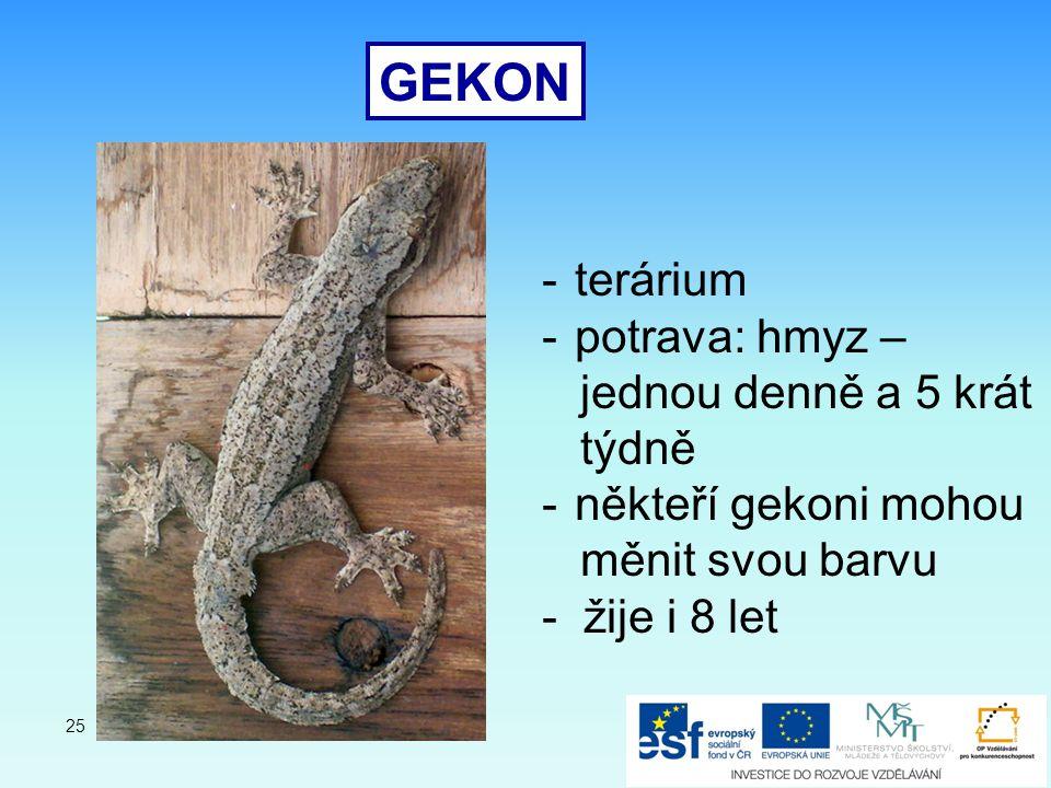 GEKON -terárium -potrava: hmyz – jednou denně a 5 krát týdně -někteří gekoni mohou měnit svou barvu - žije i 8 let 25