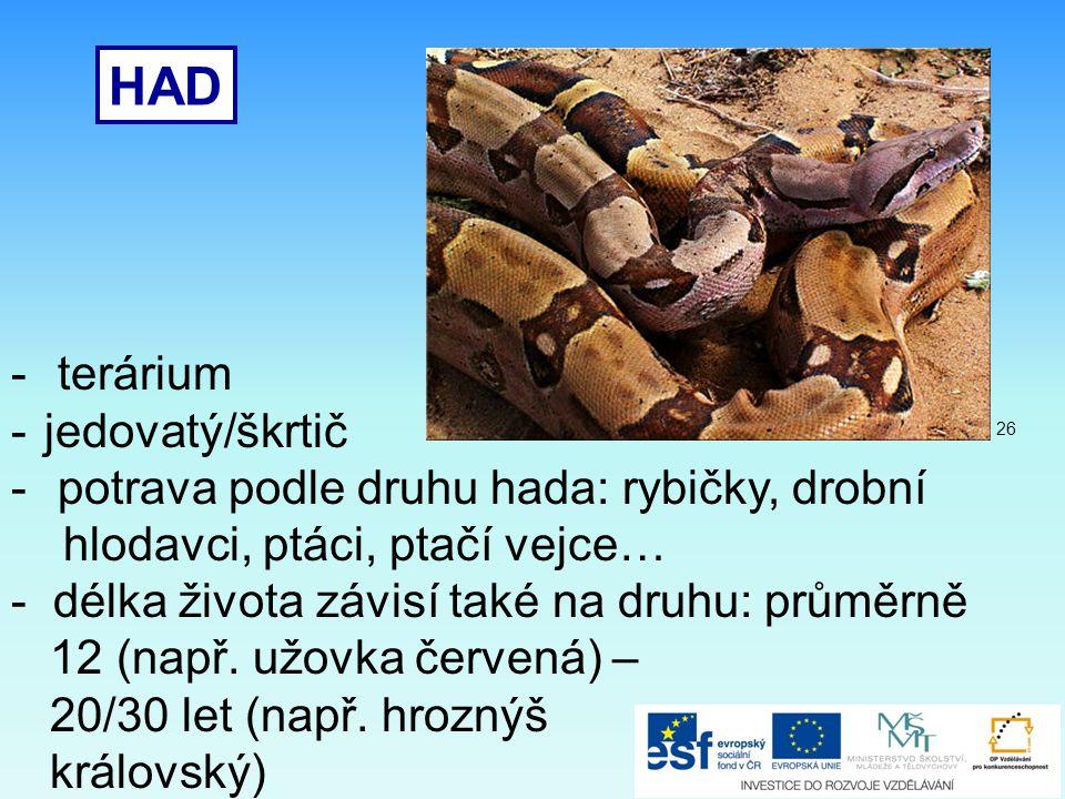 HAD - terárium -jedovatý/škrtič - potrava podle druhu hada: rybičky, drobní hlodavci, ptáci, ptačí vejce… - délka života závisí také na druhu: průměrn