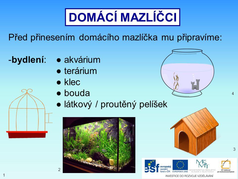 AKVARIJNÍ RYBIČKY -akvárium -potrava podle druhu rybiček: většinou sušená- rostlinná nebo živočišná -většinou žijí 3 – 5 let 19