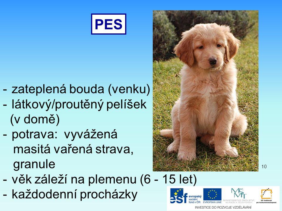 PES -zateplená bouda (venku) -látkový/proutěný pelíšek (v domě) -potrava: vyvážená masitá vařená strava, granule -věk záleží na plemenu (6 - 15 let) -každodenní procházky 10