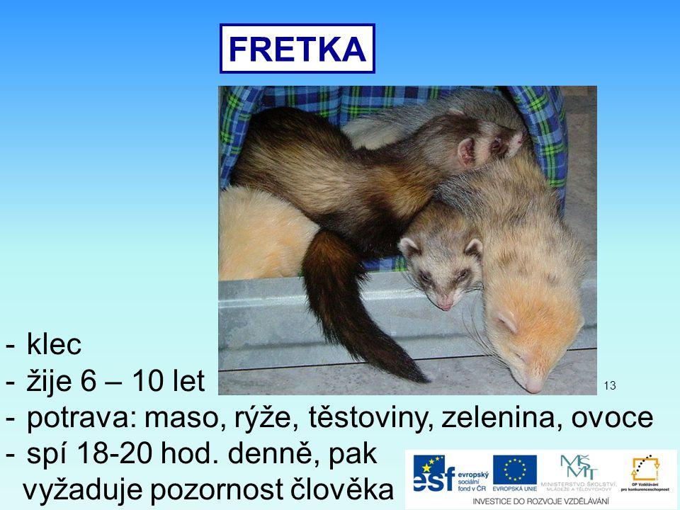 FRETKA -klec -žije 6 – 10 let -potrava: maso, rýže, těstoviny, zelenina, ovoce -spí 18-20 hod.