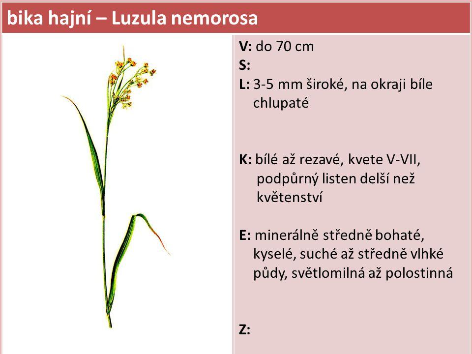 bika lesní – Luzula sylvatica V: do 80 cm S: L: 10-15 mm široké, na okraji chlupaté, někdy pouze sterilní listové růžice K: hnědé, kvete V-VI, podpůrný listen kratší než květenství E: minerálně chudé až středně bohaté, kyselé, vlhké půdy, smrkový horský druh (od 6.