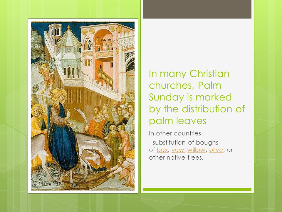 In many Christian churches, Palm Sunday is marked by the distribution of palm leaves In other countries - substitution of boughs of box, yew, willow, olive, or other native trees.boxyewwillowolive