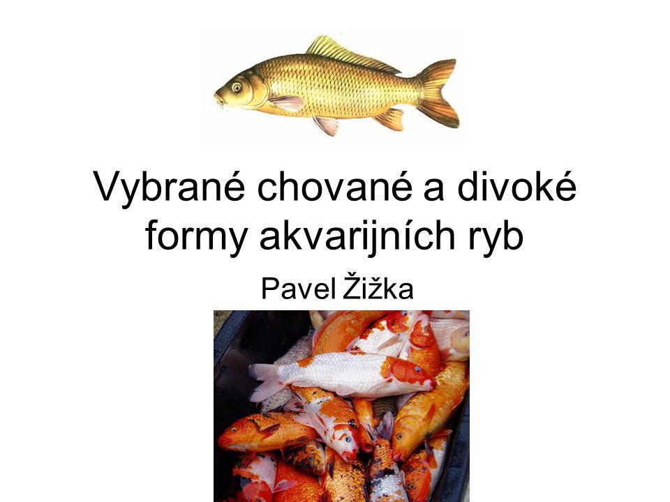 Vybrané chované a divoké formy akvarijních ryb Pavel Žižka