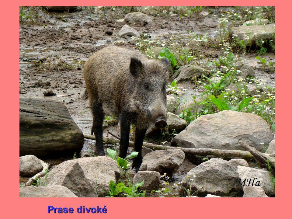 Autor prezentace: Mgr.Martina Hanzlíková Autor snímků( kromě snímků 14 – 17): Mgr.