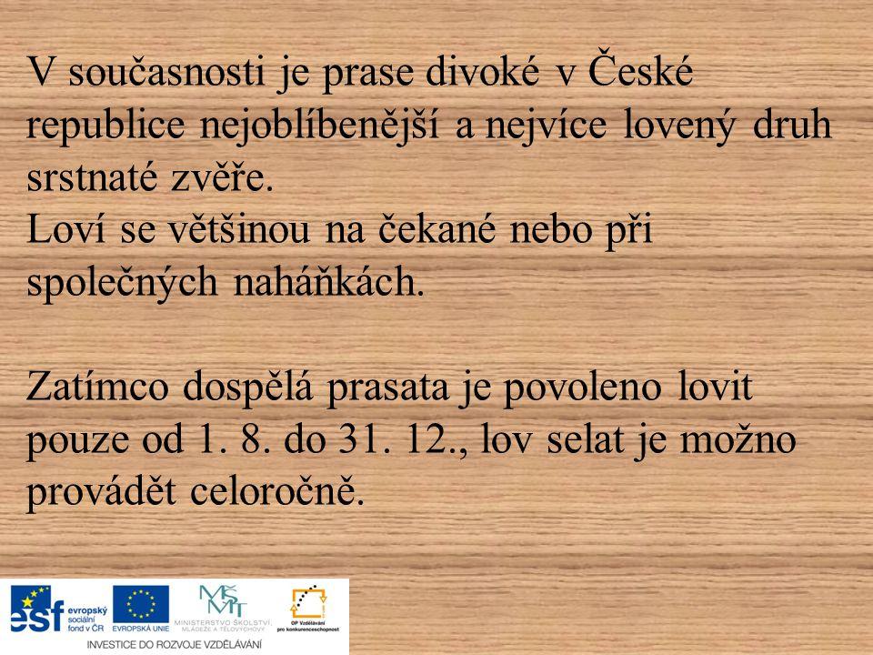 V současnosti je prase divoké v České republice nejoblíbenější a nejvíce lovený druh srstnaté zvěře.