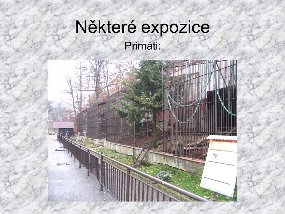 Některé expozice Primáti: