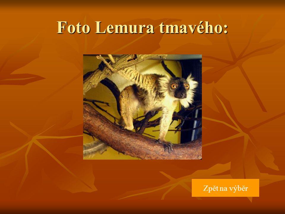 Rozměry: délka těla 41 cm, délka ocasu 55 cm, hmotnost 2,4 kg, samice o něco menší než samci Rozmnožování: Samice rodí po březosti trvající 127 dní 1-2 mláďata, o která se stará asi 4,5 měsíce.
