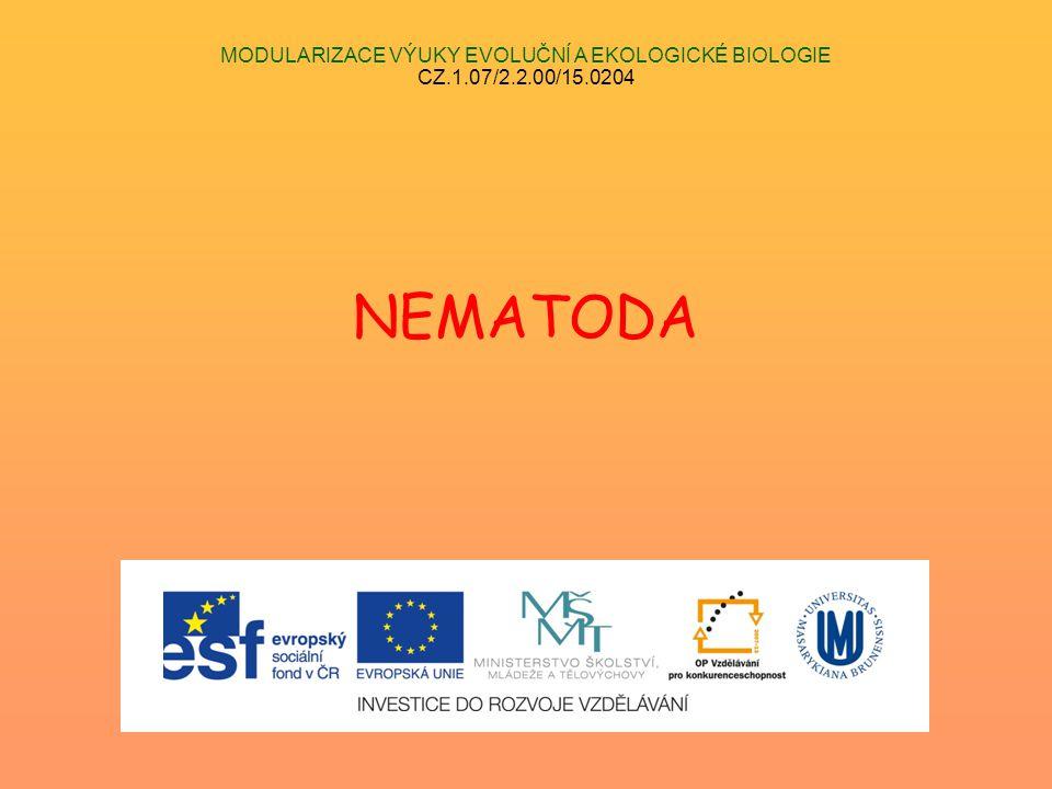 MODULARIZACE VÝUKY EVOLUČNÍ A EKOLOGICKÉ BIOLOGIE CZ.1.07/2.2.00/15.0204 NEMATODA