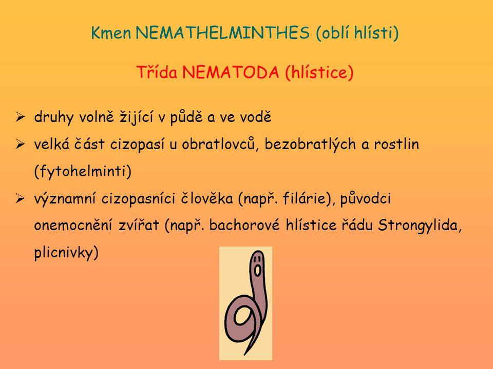 Kmen NEMATHELMINTHES (oblí hlísti) Třída NEMATODA (hlístice)  druhy volně žijící v půdě a ve vodě  velká část cizopasí u obratlovců, bezobratlých a