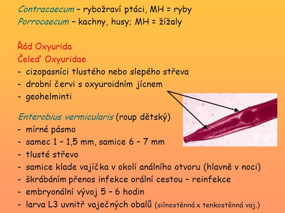 Contracaecum – rybožraví ptáci, MH = ryby Porrocaecum – kachny, husy; MH = žížaly Řád Oxyurida Čeleď Oxyuridae -cizopasníci tlustého nebo slepého stře