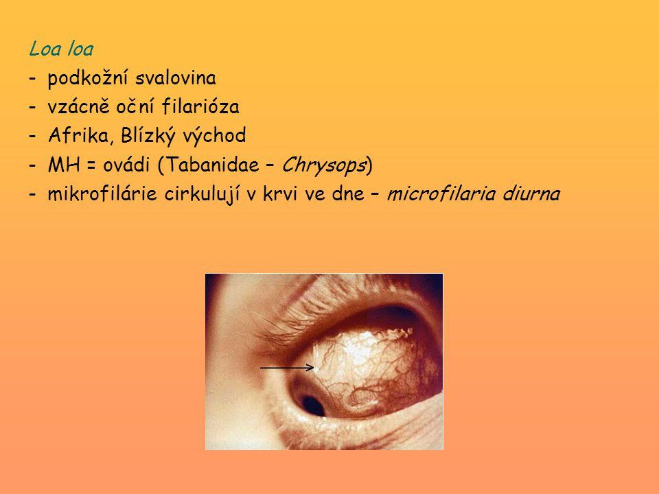 Loa loa -podkožní svalovina -vzácně oční filarióza -Afrika, Blízký východ -MH = ovádi (Tabanidae – Chrysops) -mikrofilárie cirkulují v krvi ve dne – m
