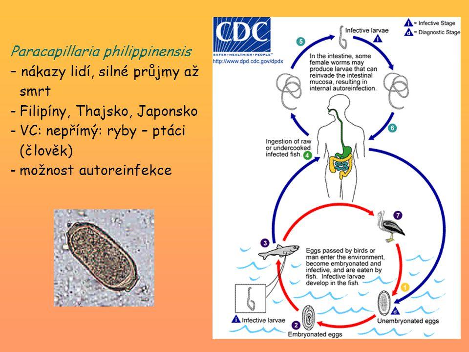 Paracapillaria philippinensis – nákazy lidí, silné průjmy až smrt -Filipíny, Thajsko, Japonsko -VC: nepřímý: ryby – ptáci (člověk) -možnost autoreinfe