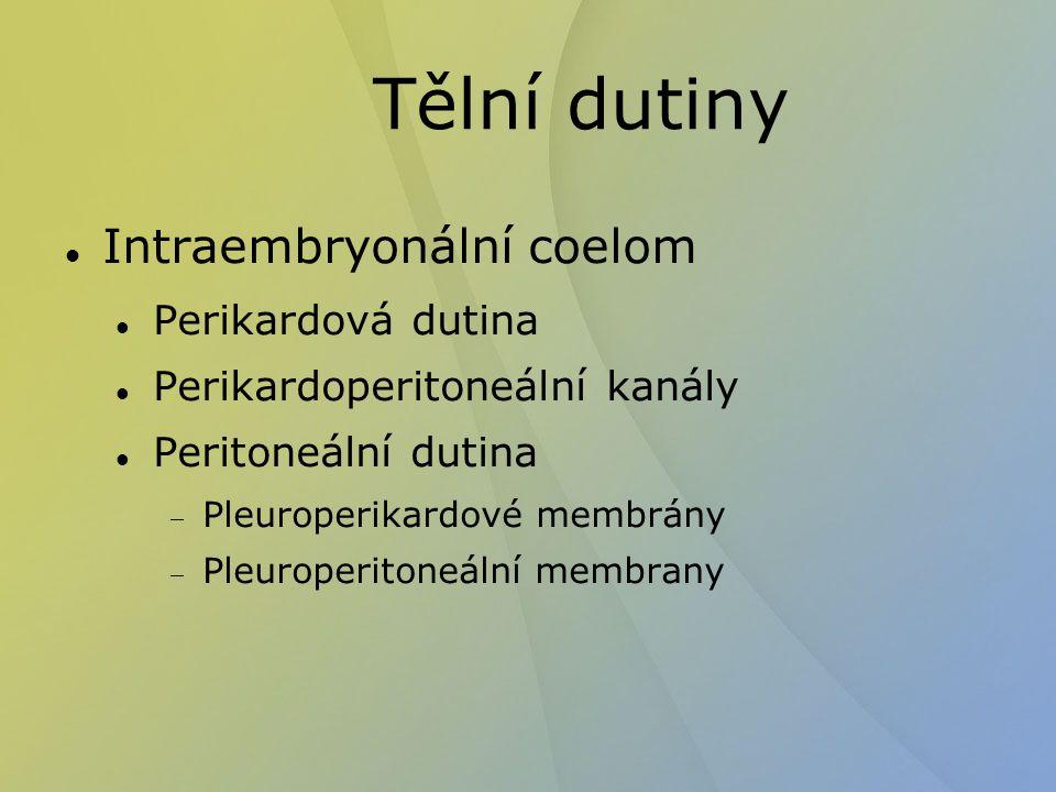 Tělní dutiny Intraembryonální coelom Perikardová dutina Perikardoperitoneální kanály Peritoneální dutina  Pleuroperikardové membrány  Pleuroperitone