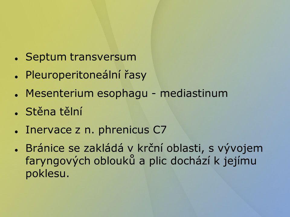 Septum transversum Pleuroperitoneální řasy Mesenterium esophagu - mediastinum Stěna tělní Inervace z n. phrenicus C7 Bránice se zakládá v krční oblast