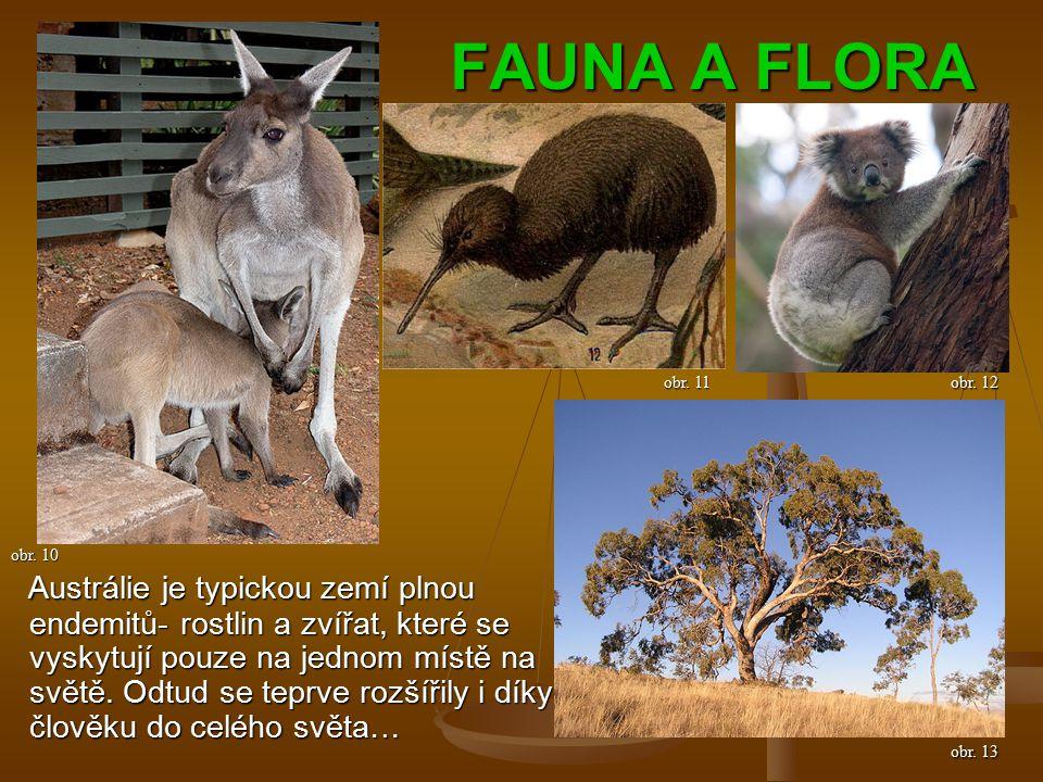 FAUNA A FLORA Austrálie je typickou zemí plnou endemitů- rostlin a zvířat, které se vyskytují pouze na jednom místě na světě.