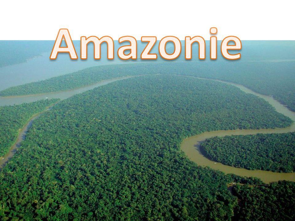 UKAŽ NA MAPĚ Kordillery, Andy, Apalačské pohoří, Brazilská vysočina, Guayanská vysočina Arktická nížina, Pobřežní nížina, Laplatská nížina, Orinocká nížina, Amazonská nížina Centrální roviny, Patagonská tabule