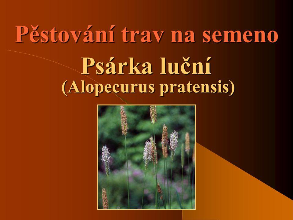 SOŠS a SOU KadaňVíceleté pícniny - Psárka luční2 Význam pěstování trav  Jde o pěstování trav za účelem získání osiva.