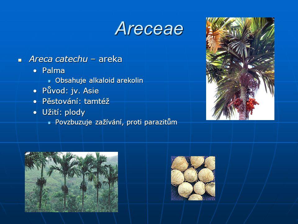 Areceae Areca catechu – areka Areca catechu – areka PalmaPalma Obsahuje alkaloid arekolin Obsahuje alkaloid arekolin Původ: jv.