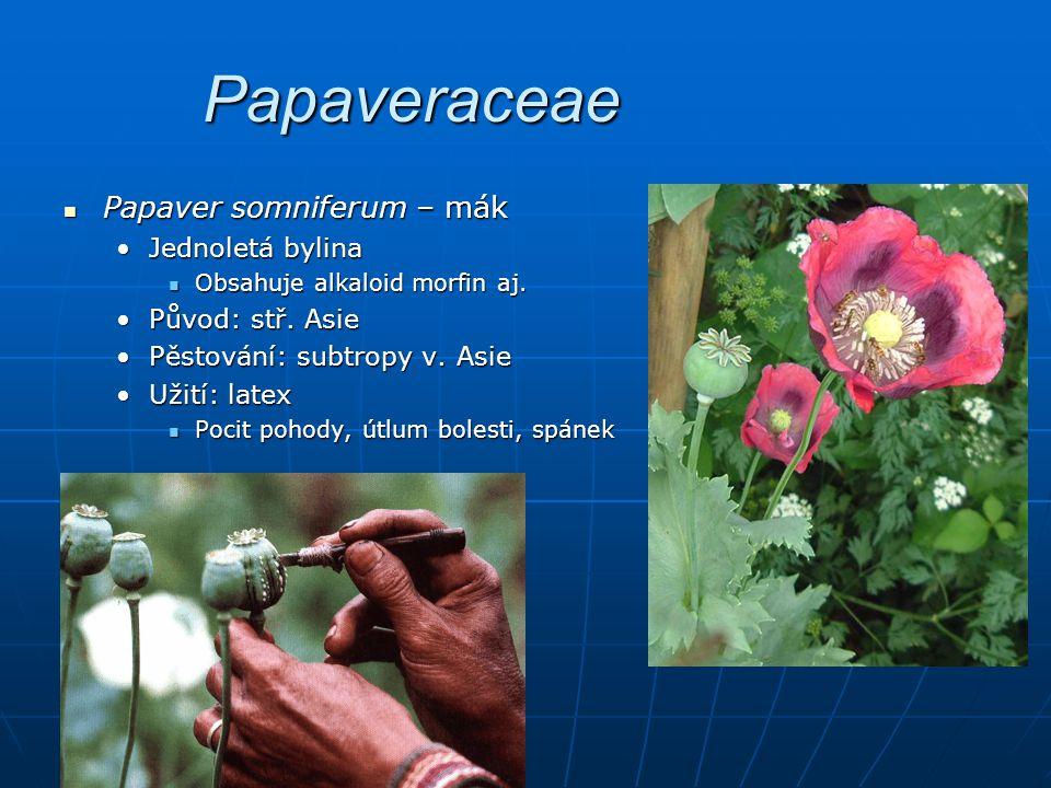 Papaveraceae Papaver somniferum – mák Papaver somniferum – mák Jednoletá bylinaJednoletá bylina Obsahuje alkaloid morfin aj.