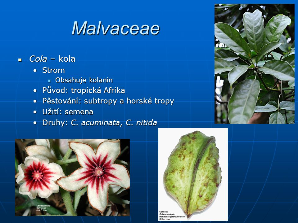 Malvaceae Cola – kola Cola – kola StromStrom Obsahuje kolanin Obsahuje kolanin Původ: tropická AfrikaPůvod: tropická Afrika Pěstování: subtropy a horské tropyPěstování: subtropy a horské tropy Užití: semenaUžití: semena Druhy: C.