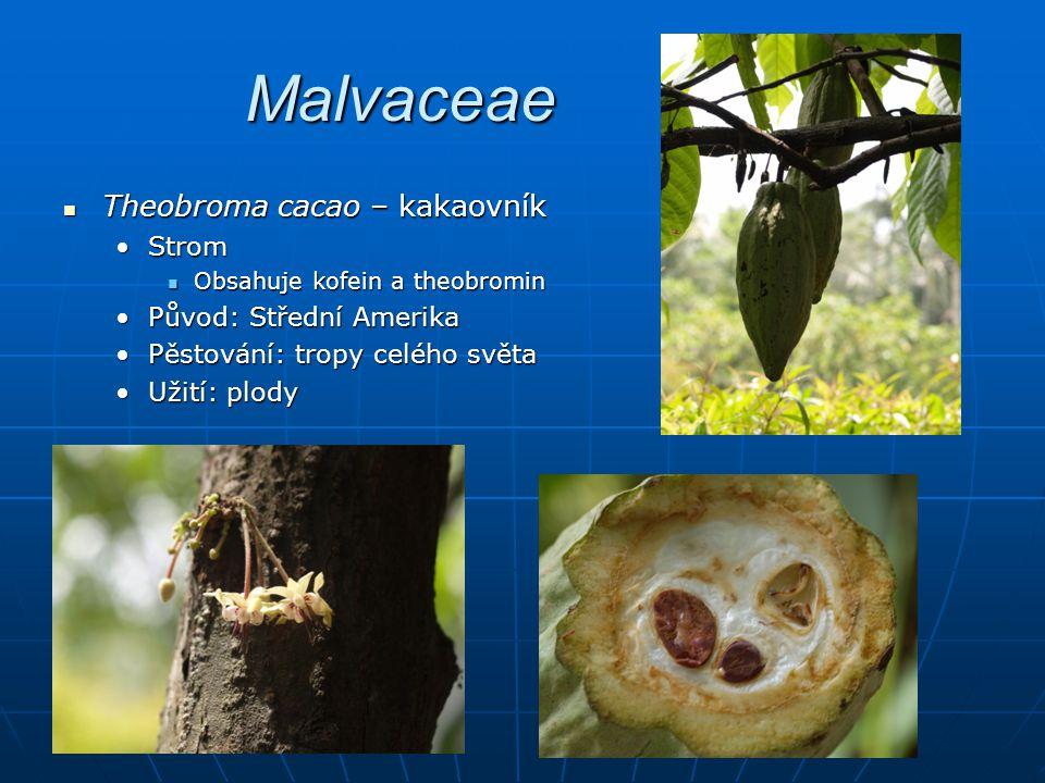 Piperaceae Piper betle – pepř betelový Piper betle – pepř betelový LiánaLiána Obsahuje alkaloidy Obsahuje alkaloidy Původ: v.