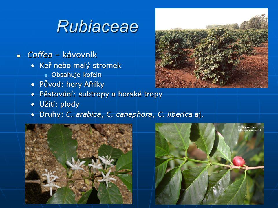 Rubiaceae Coffea – kávovník Coffea – kávovník Keř nebo malý stromekKeř nebo malý stromek Obsahuje kofein Obsahuje kofein Původ: hory AfrikyPůvod: hory Afriky Pěstování: subtropy a horské tropyPěstování: subtropy a horské tropy Užití: plodyUžití: plody Druhy: C.
