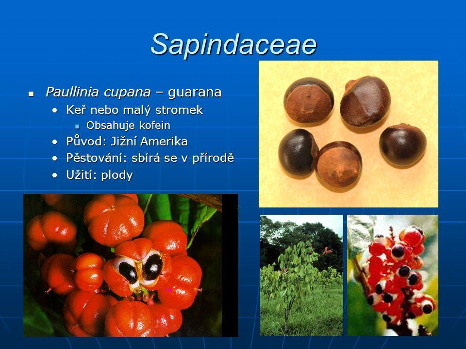 Sapindaceae Paullinia cupana – guarana Paullinia cupana – guarana Keř nebo malý stromekKeř nebo malý stromek Obsahuje kofein Obsahuje kofein Původ: Jižní AmerikaPůvod: Jižní Amerika Pěstování: sbírá se v příroděPěstování: sbírá se v přírodě Užití: plodyUžití: plody