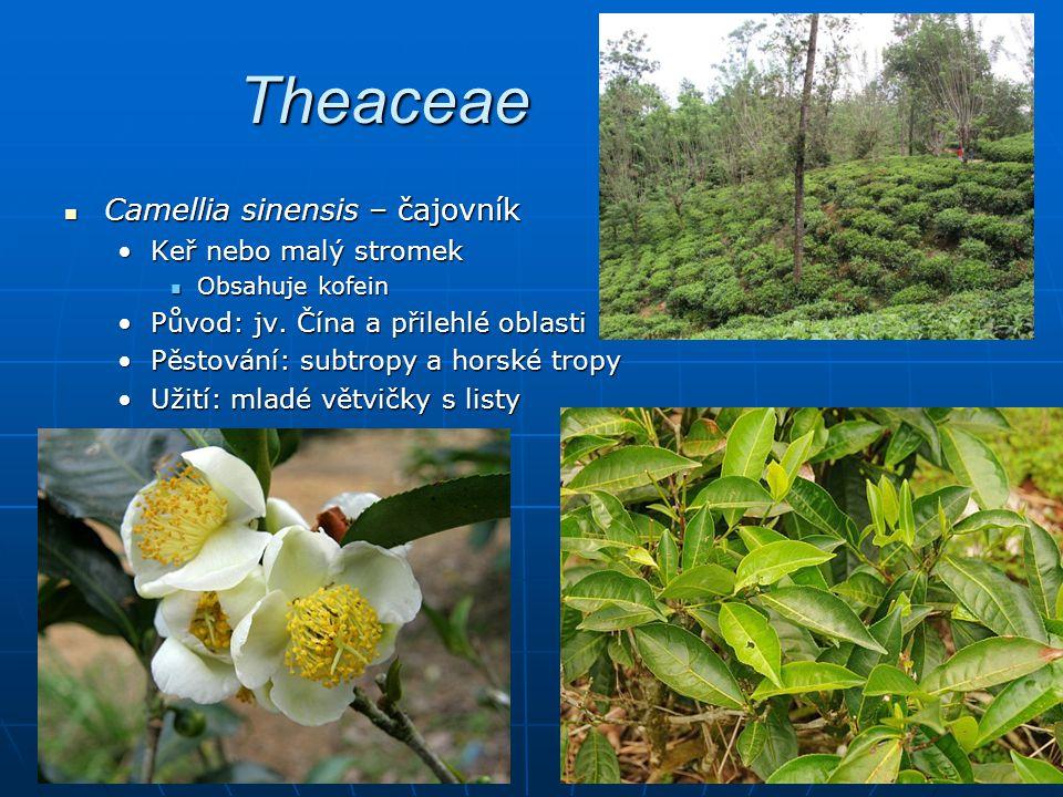 Theaceae Camellia sinensis – čajovník Camellia sinensis – čajovník Keř nebo malý stromekKeř nebo malý stromek Obsahuje kofein Obsahuje kofein Původ: jv.