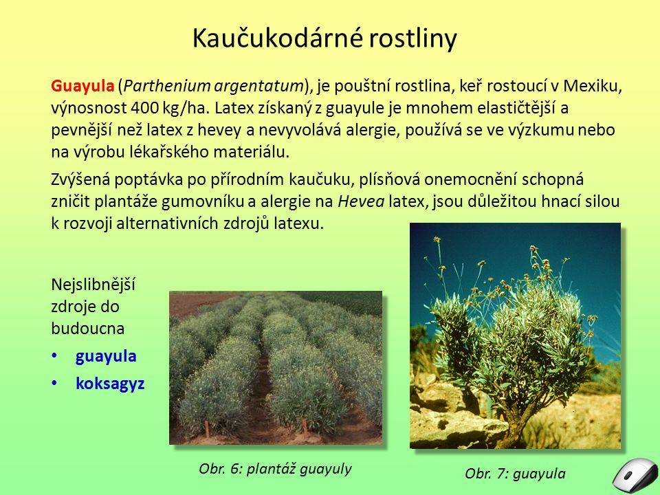 Guayula (Parthenium argentatum), je pouštní rostlina, keř rostoucí v Mexiku, výnosnost 400 kg/ha. Latex získaný z guayule je mnohem elastičtější a pev
