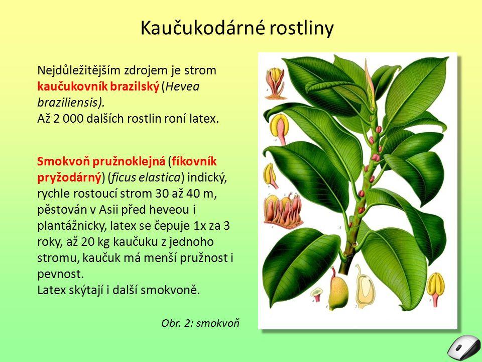 Kaučukodárné rostliny Nejdůležitějším zdrojem je strom kaučukovník brazilský (Hevea braziliensis). Až 2 000 dalších rostlin roní latex. Obr. 2: smokvo