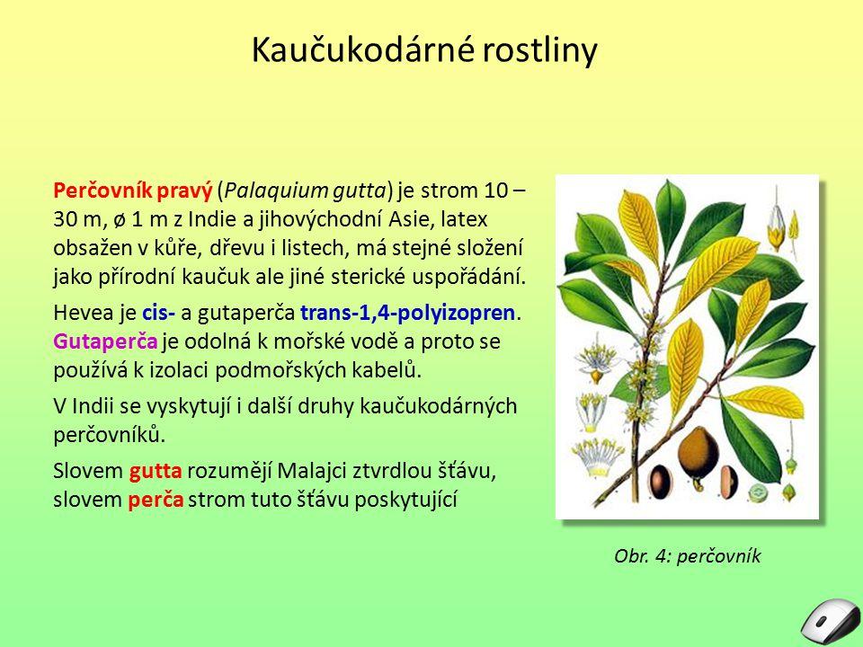 Perčovník pravý (Palaquium gutta) je strom 10 – 30 m, ø 1 m z Indie a jihovýchodní Asie, latex obsažen v kůře, dřevu i listech, má stejné složení jako