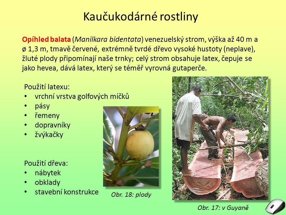 Obr. 17: v Guyaně Opíhled balata (Manilkara bidentata) venezuelský strom, výška až 40 m a ø 1,3 m, tmavě červené, extrémně tvrdé dřevo vysoké hustoty