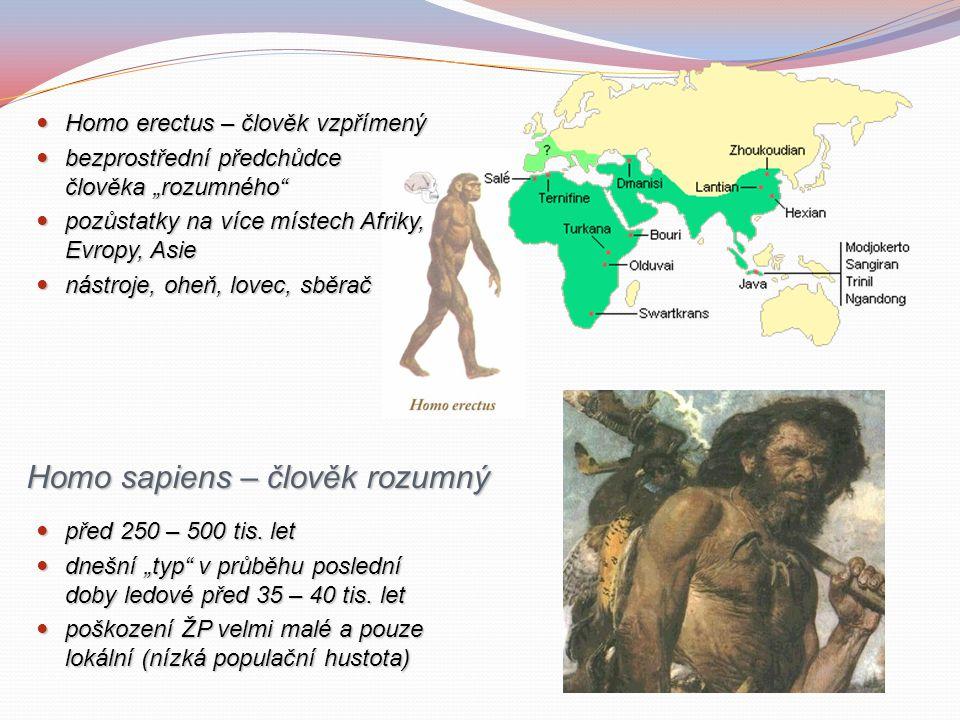 """Homo erectus – člověk vzpřímený Homo erectus – člověk vzpřímený bezprostřední předchůdce člověka """"rozumného bezprostřední předchůdce člověka """"rozumného pozůstatky na více místech Afriky, Evropy, Asie pozůstatky na více místech Afriky, Evropy, Asie nástroje, oheň, lovec, sběrač nástroje, oheň, lovec, sběrač Homo sapiens – člověk rozumný před 250 – 500 tis."""