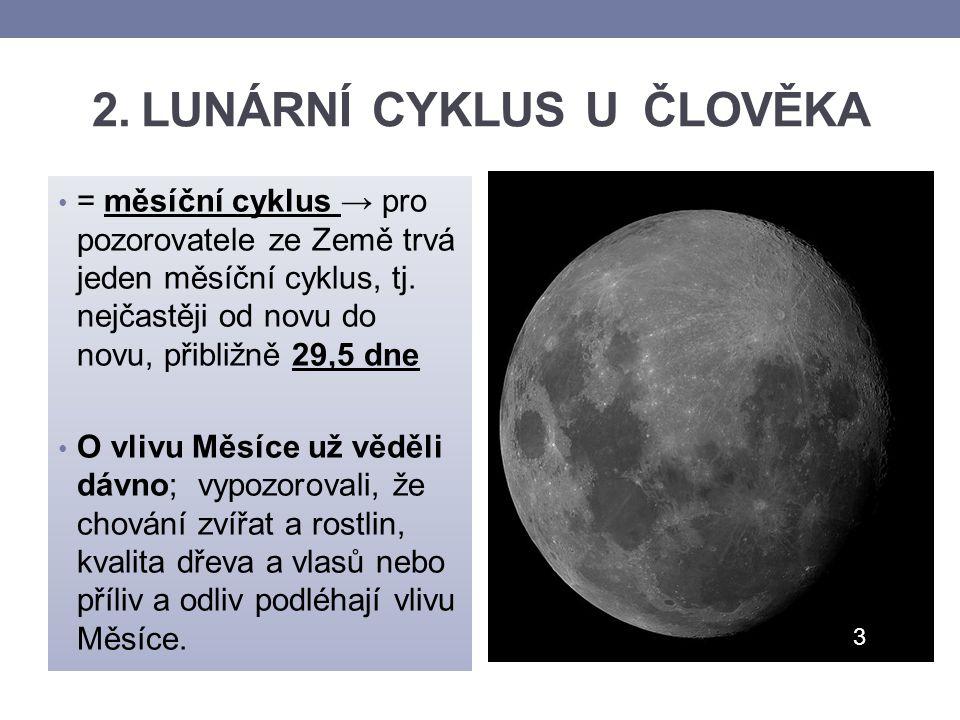 2. LUNÁRNÍ CYKLUS U ČLOVĚKA = měsíční cyklus → pro pozorovatele ze Země trvá jeden měsíční cyklus, tj. nejčastěji od novu do novu, přibližně 29,5 dne