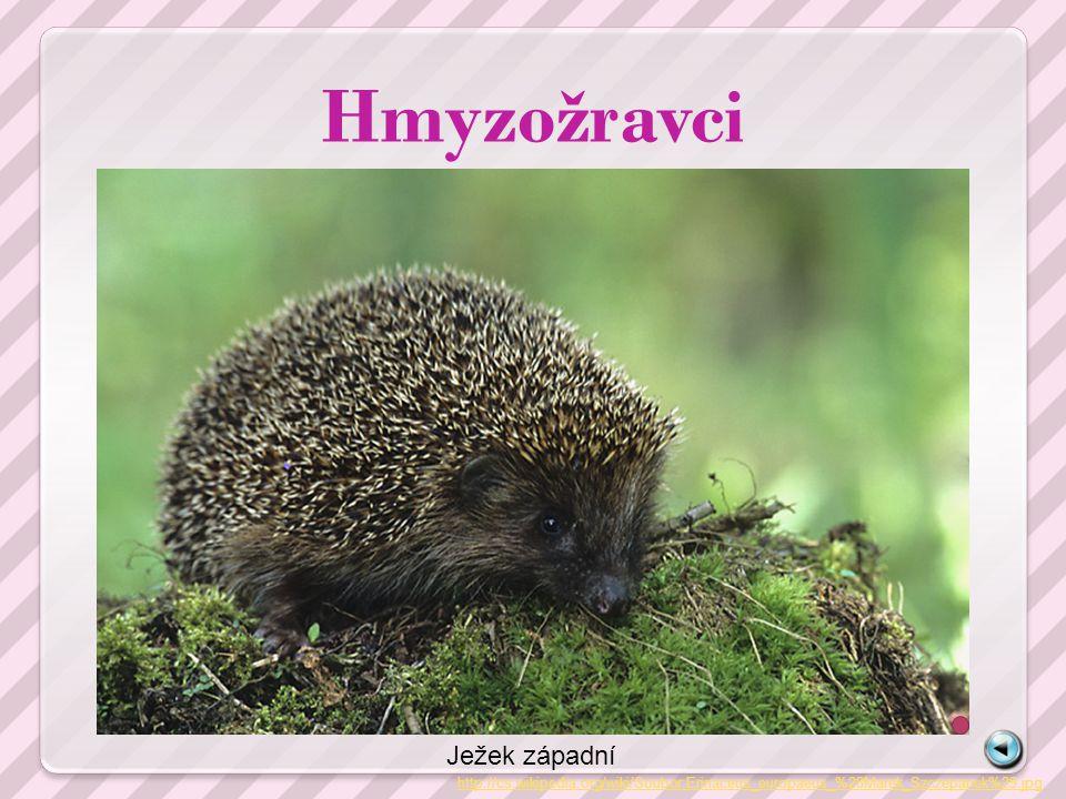 Hmyzožravci http://cs.wikipedia.org/wiki/Soubor:Erinaceus_europaeus_%28Marek_Szczepanek%29.jpg Ježek západní