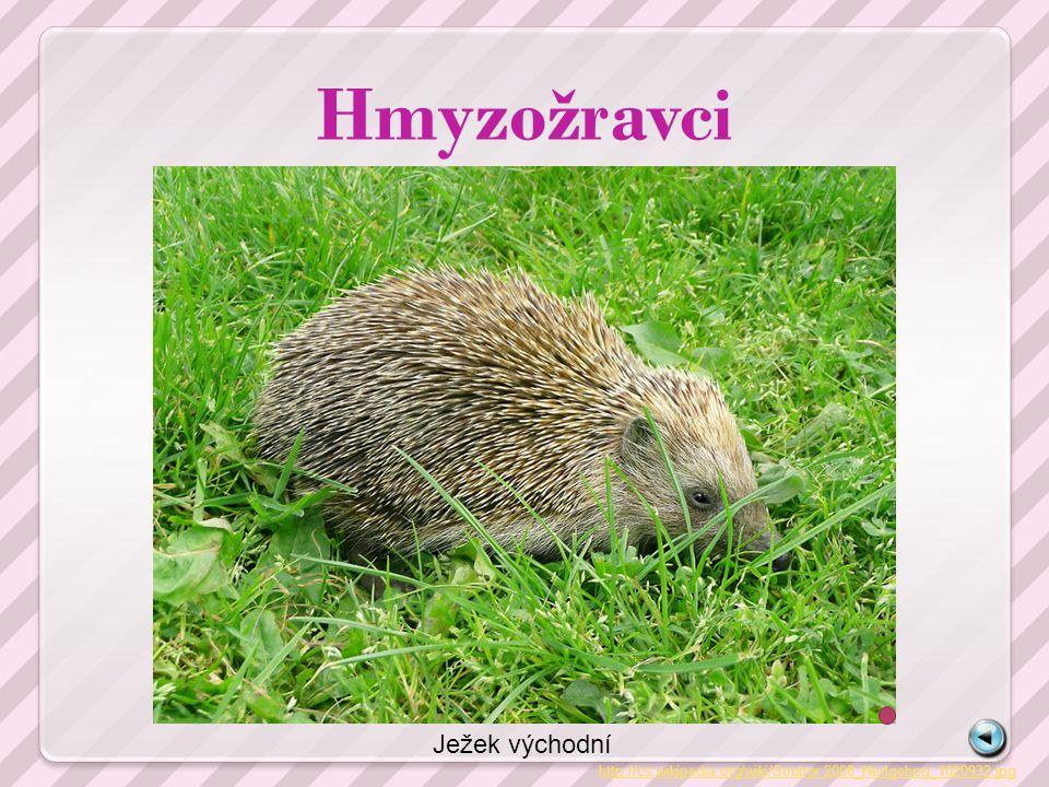 Hmyzožravci http://cs.wikipedia.org/wiki/Soubor:2008_Hedgehog_1020932.jpg Ježek východní