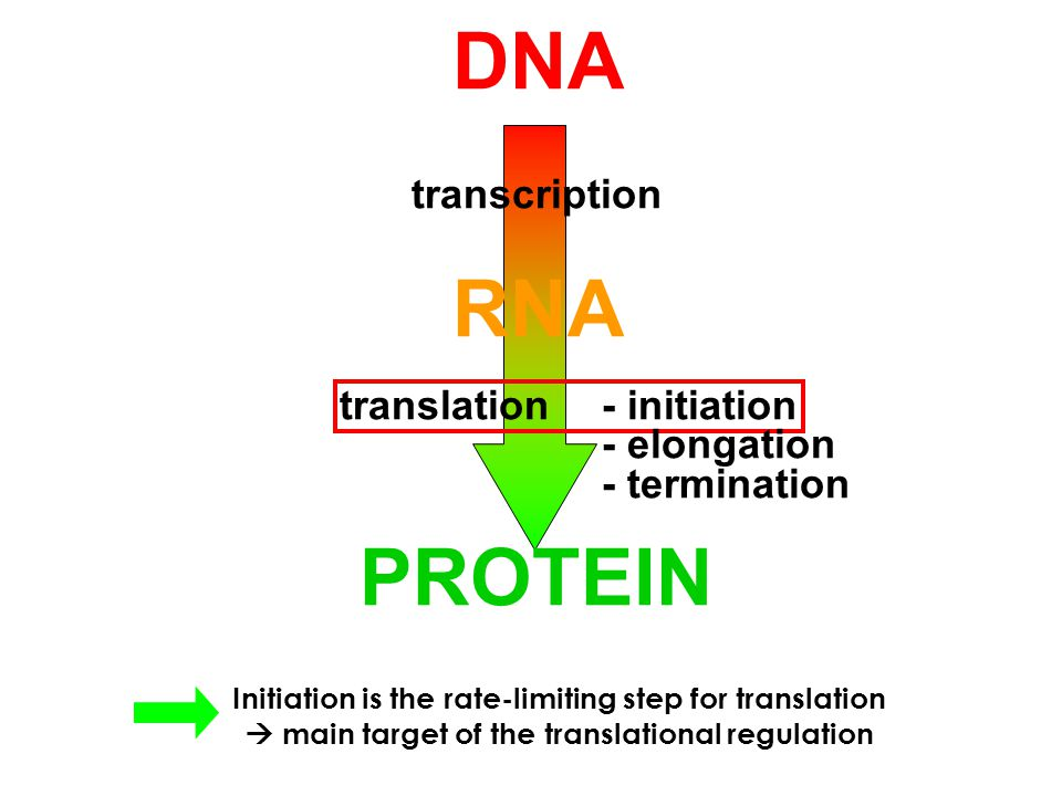 5' end determination / (f)Met-tRNA i Met recruitment / mRNA recruitment / the AUG start codon recognition BACTERIA Shine-Dalgarno seq.