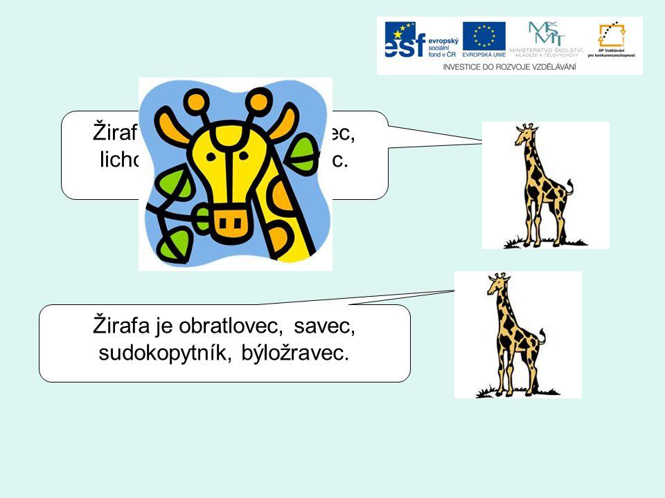 Žirafa je obratlovec, savec, lichokopytník, býložravec.