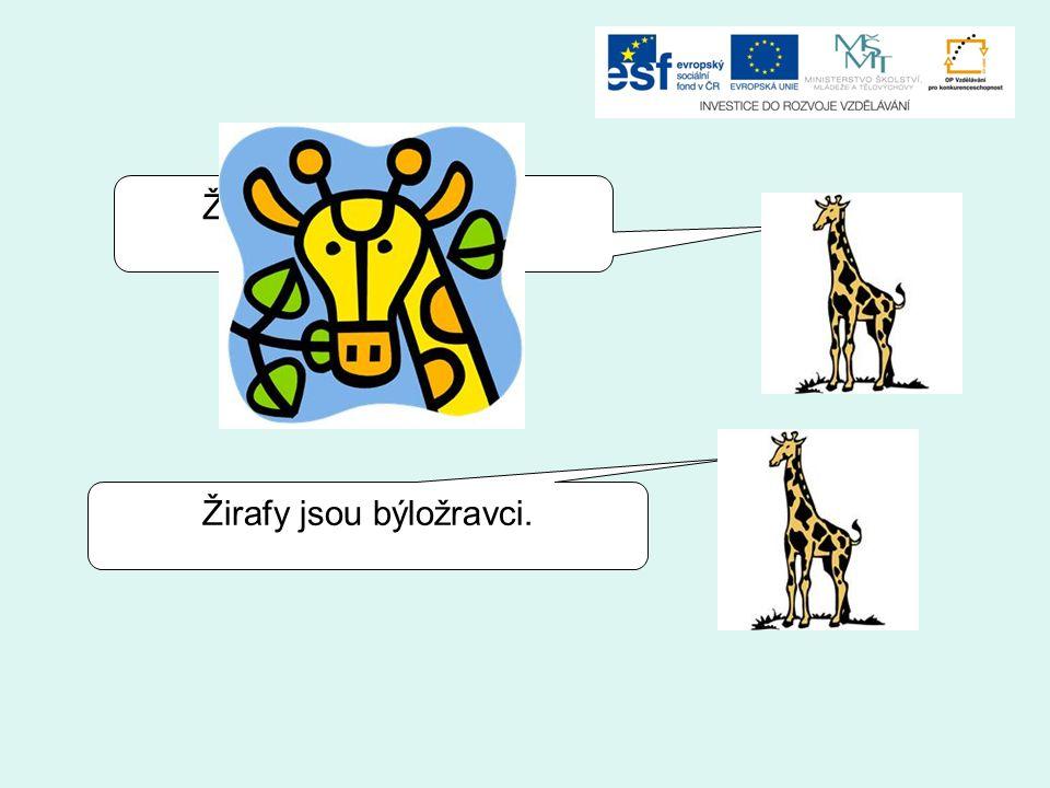 Žirafy jsou všežravci. Žirafy jsou býložravci.