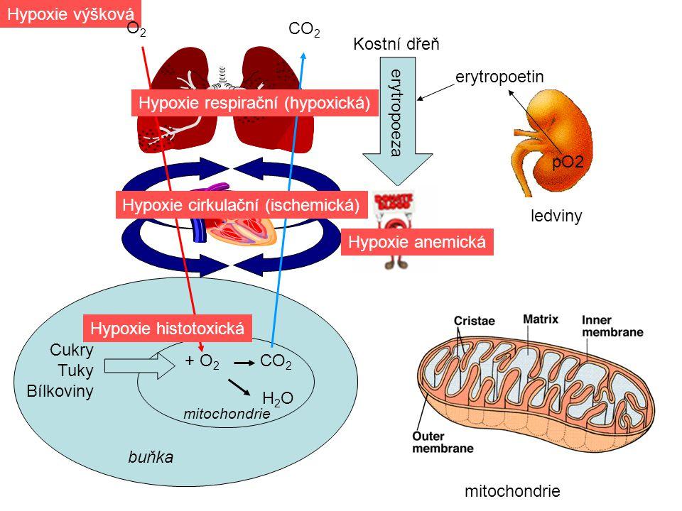 pO2 ledviny erytropoetin Kostní dřeň erytropoeza Cukry Tuky Bílkoviny buňka + O 2 CO 2 CO 2 H2OH2O mitochondrie Hypoxie histotoxická Hypoxie respirační (hypoxická) Hypoxie výšková O2O2 Hypoxie cirkulační (ischemická) Hypoxie anemická