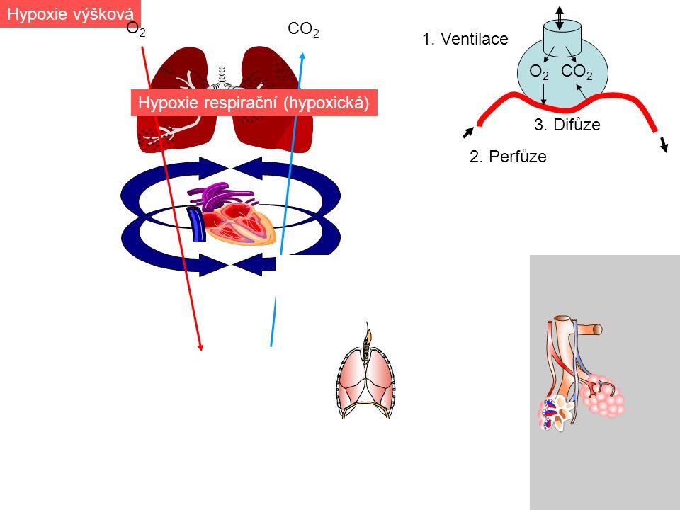 1. Ventilace CO 2 O2O2 Hypoxie respirační (hypoxická) Hypoxie výšková O2O2 2. Perfůze 3. Difůze