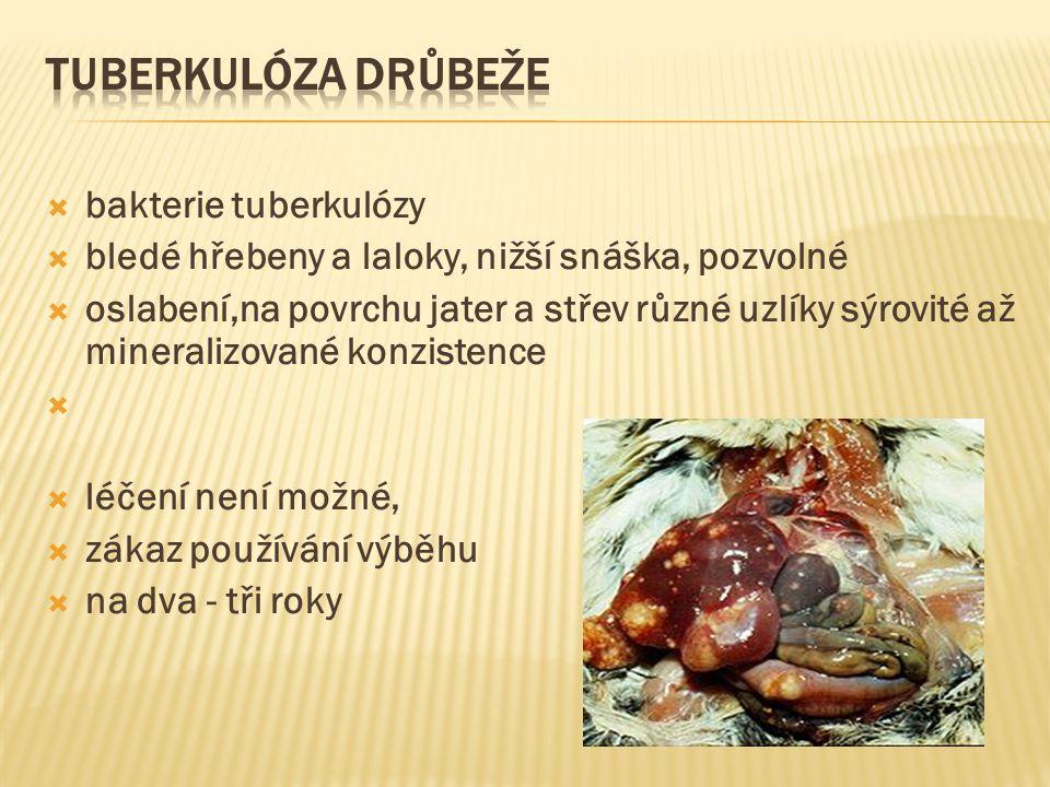  bakterie tuberkulózy  bledé hřebeny a laloky, nižší snáška, pozvolné  oslabení,na povrchu jater a střev různé uzlíky sýrovité až mineralizované ko