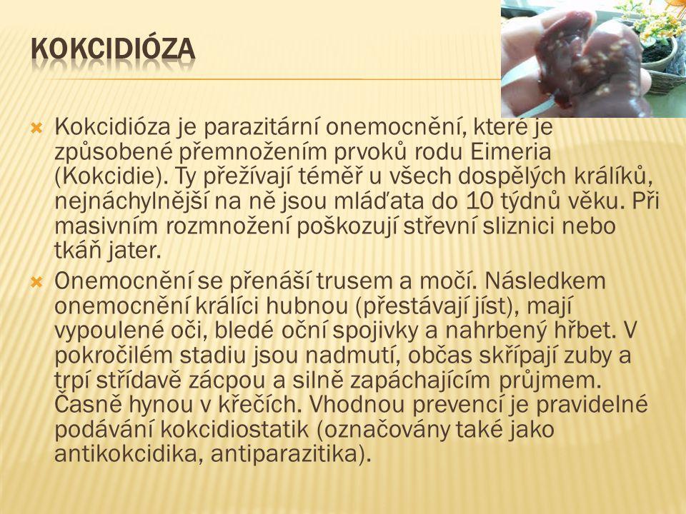  Kokcidióza je parazitární onemocnění, které je způsobené přemnožením prvoků rodu Eimeria (Kokcidie). Ty přežívají téměř u všech dospělých králíků, n