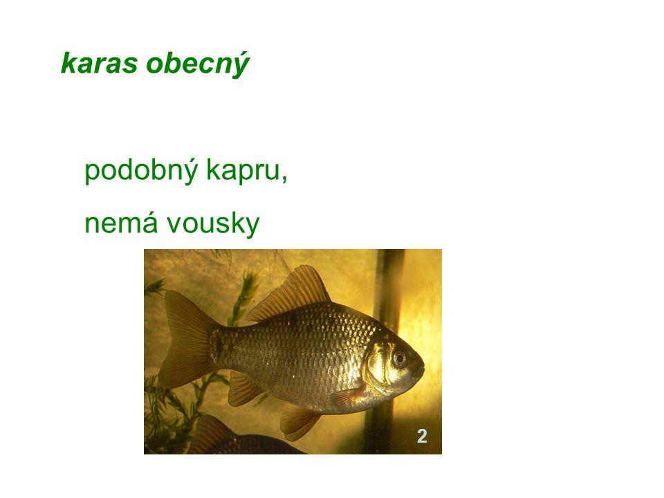 Chov ryb chov kaprů = teplovodní rybníkářství od 15. století