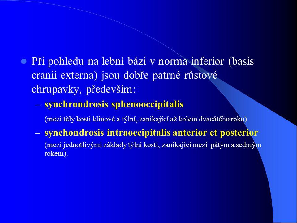 Při pohledu na lební bázi v norma inferior (basis cranii externa) jsou dobře patrné růstové chrupavky, především: – synchrondrosis sphenooccipitalis (mezi těly kosti klínové a týlní, zanikající až kolem dvacátého roku) – synchondrosis intraoccipitalis anterior et posterior (mezi jednotlivými základy týlní kosti, zanikající mezi pátým a sedmým rokem).