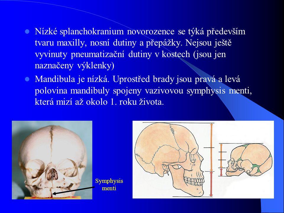 Nízké splanchokranium novorozence se týká především tvaru maxilly, nosní dutiny a přepážky. Nejsou ještě vyvinuty pneumatizační dutiny v kostech (jsou
